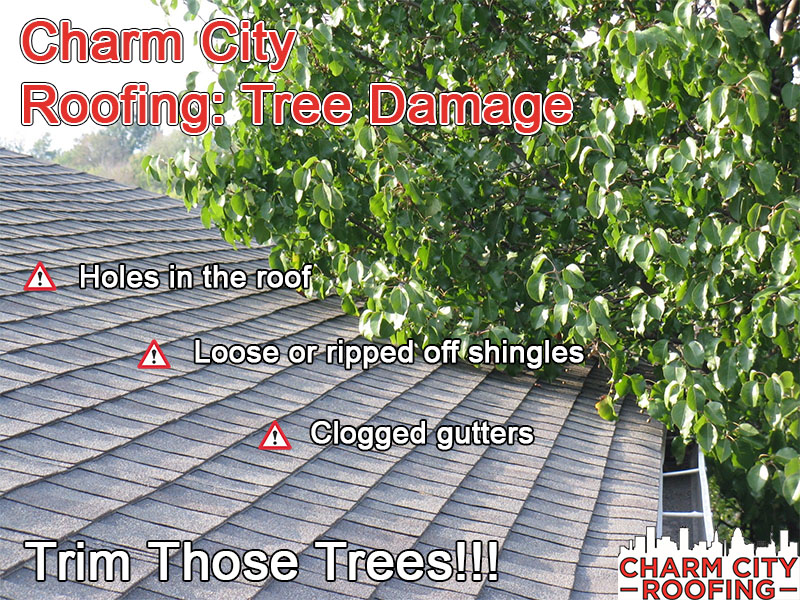 Roofing: Tree Damage