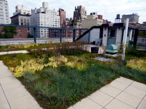 A photo of a green roof garden on a residential building flat roof
